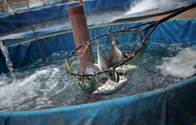 آب خوش از گلوی تولیدکنندگان ماهی خرمشهر پایین نمی رود